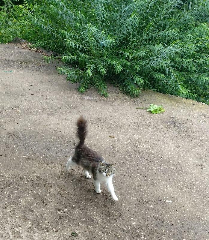 Ольховецкий котик