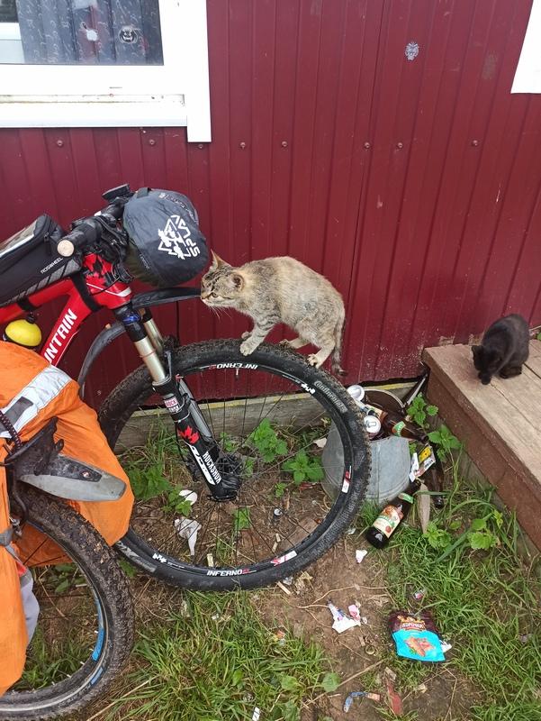 Котики в Родне